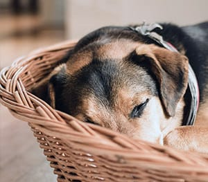 Vollverpflegung in der Hundepension