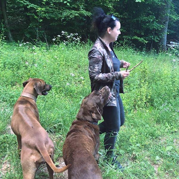 Auf der Wiese mit den Hunden