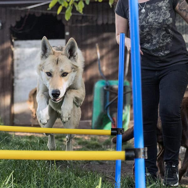 Hundeübungen und Hundetraining